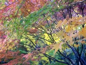 Fall in Tokyo, 2013